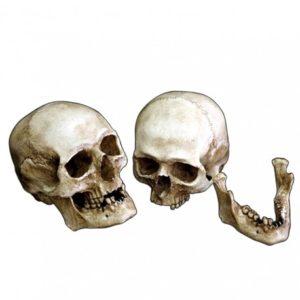 Replica Cráneo Humano en resina